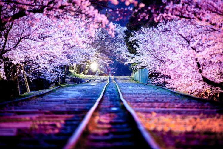 japan-town-kyoto-spring-april-night-lights-sakura