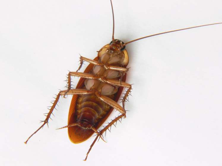 cockroach die