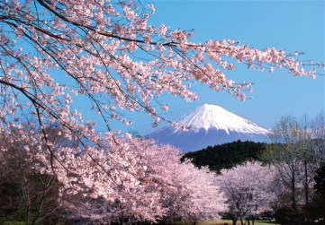 Sakura and Mt Fuji http://saifalqrim.com/vb/showthread.php?t=16256