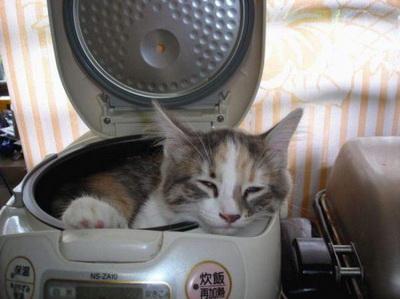 cat cooker